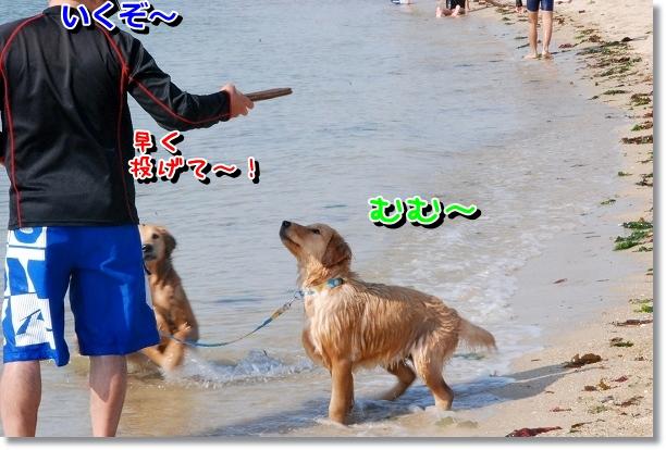 DSC_0235_20120507232143.jpg