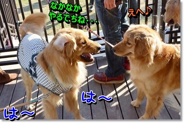 DSC_0291_20121103224523.jpg