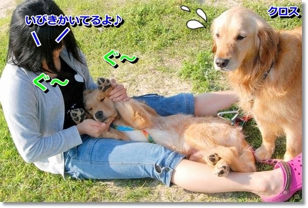 DSC_0294_20120507232247.jpg