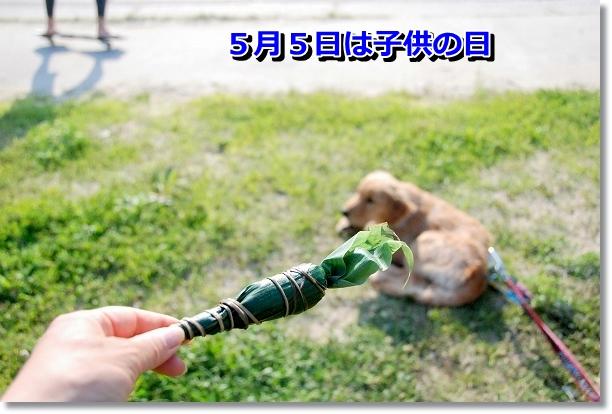 DSC_0301_20120507021734.jpg