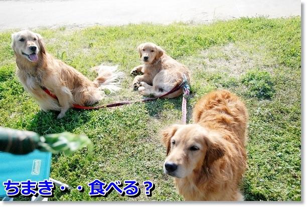 DSC_0303_20120507021733.jpg