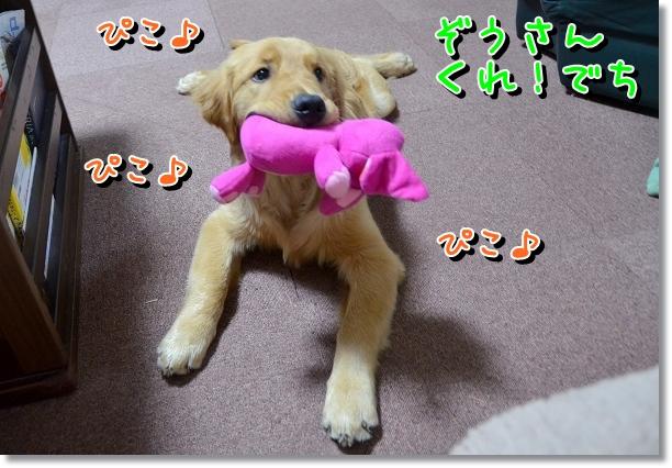 DSC_0303_20120524200646.jpg