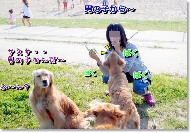 DSC_0304_20120507021732.jpg