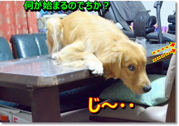 DSC_0407_20121031020201.jpg