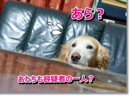 DSC_0414_20121031020200.jpg