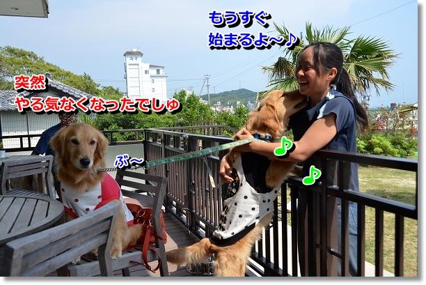 DSC_0437_20120601205809.jpg