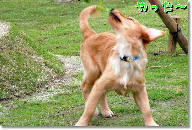 DSC_0451_20120510005635.jpg