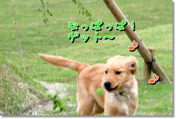 DSC_0452_20120510005634.jpg