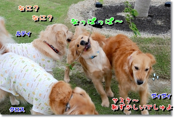 DSC_0453_20120510005633.jpg