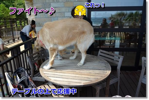 DSC_0456_20120601205851.jpg