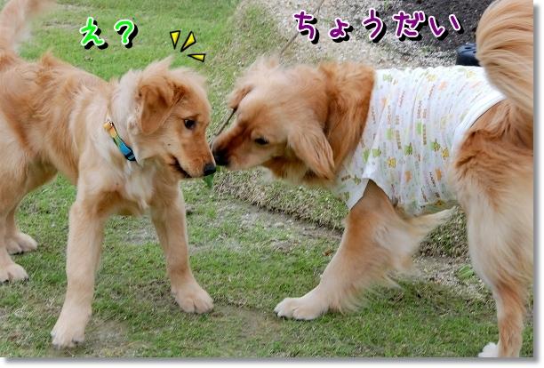 DSC_0457_20120510005705.jpg