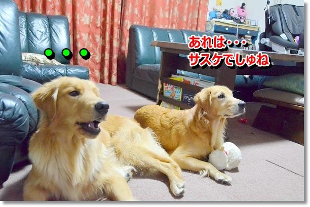 DSC_0457_20121031020404.jpg