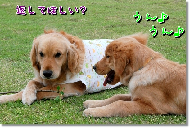DSC_0468_20120510005701.jpg
