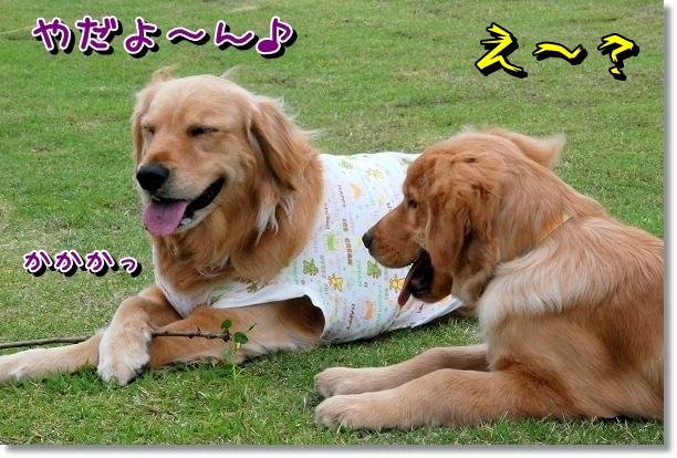 DSC_0469_20120510005756.jpg