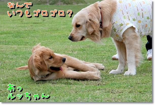 DSC_0499_20120510234557.jpg