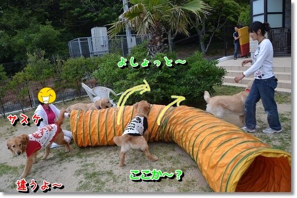 DSC_0499_20120603004118.jpg