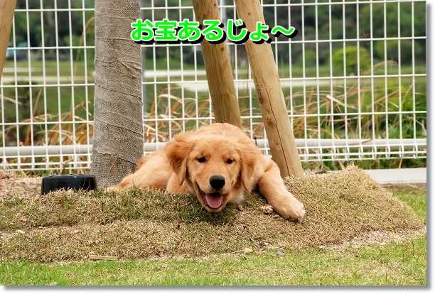 DSC_0519_20120510234650.jpg