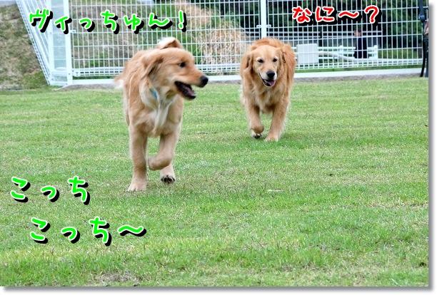 DSC_0523_20120510234648.jpg