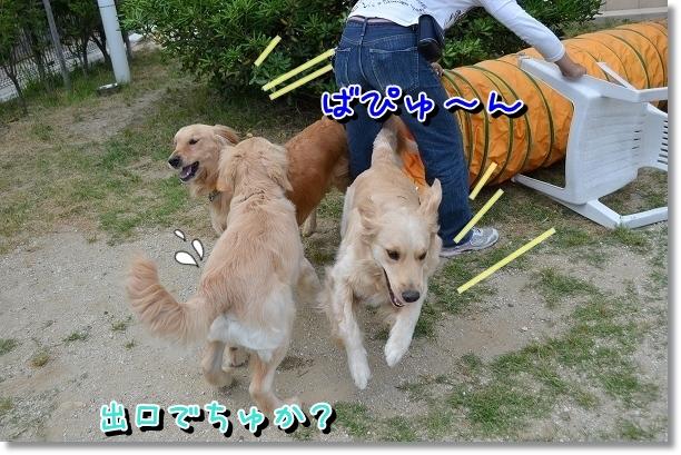 DSC_0526_20120603004201.jpg