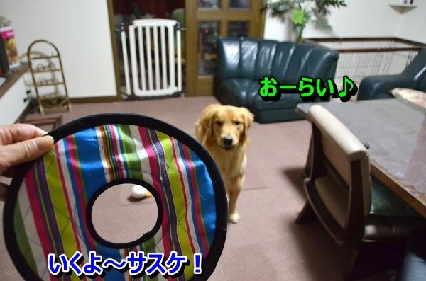 DSC_0579_20121122222402.jpg