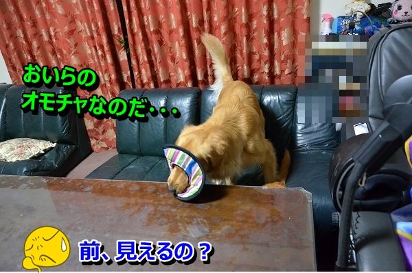 DSC_0580_20121122222403.jpg