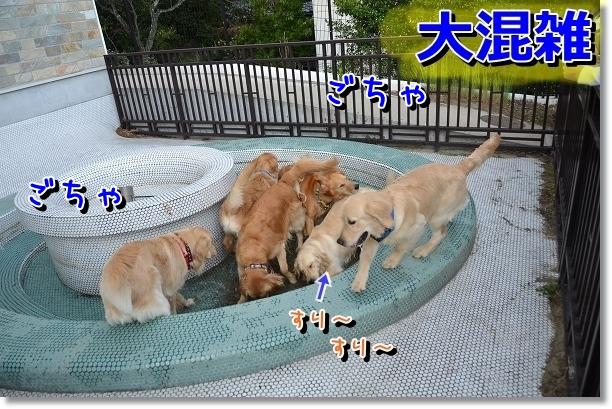 DSC_0581_20120603110819.jpg