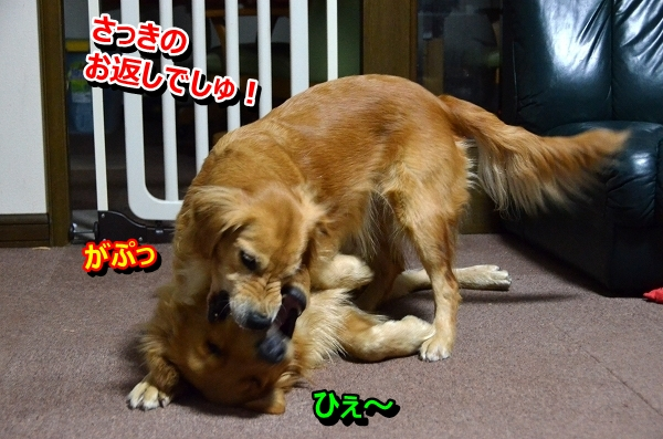 DSC_0605_20121122222710.jpg