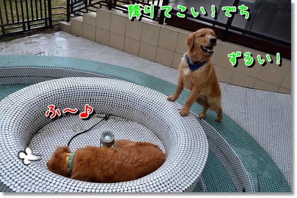 DSC_0616_20120603110913.jpg