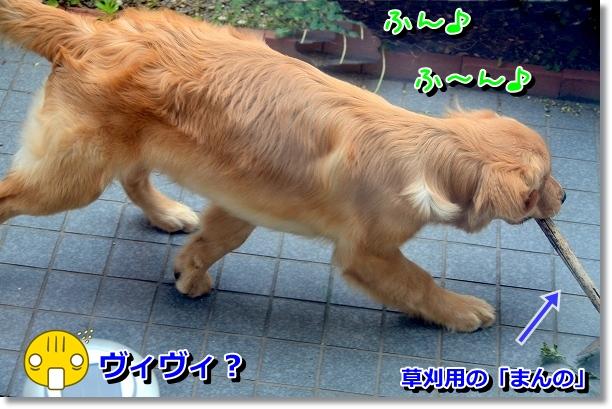 DSC_0703_20120608161426.jpg
