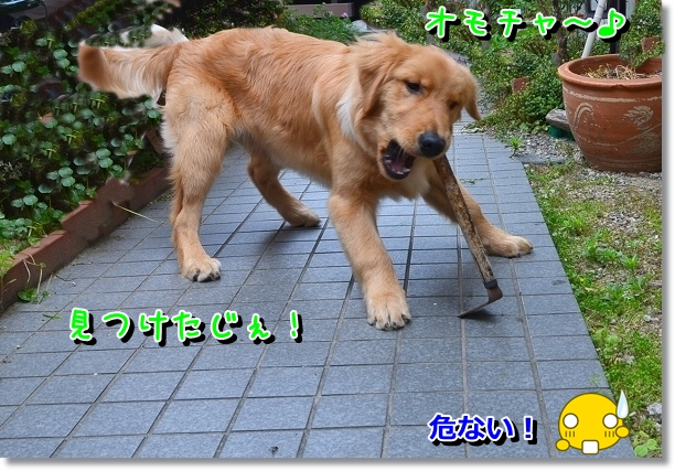 DSC_0709_20120608161424.jpg