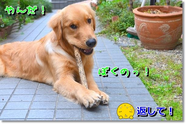 DSC_0711_20120608161422.jpg