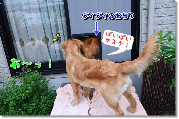 DSC_0713_20120608161541.jpg