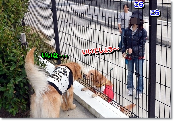 DSC_0721_20121130000009.jpg
