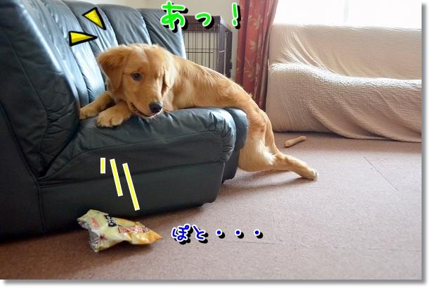 DSC_0727_20120716010010.jpg