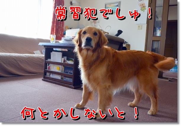 DSC_0732_20120716010051.jpg