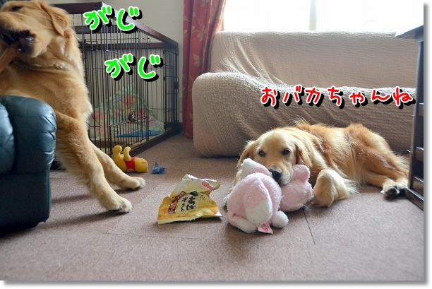 DSC_0748_20120716010245.jpg