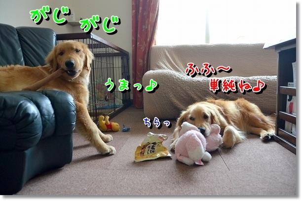 DSC_0749_20120716010245.jpg