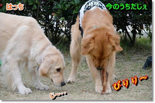 DSC_0785_20121202225417.jpg