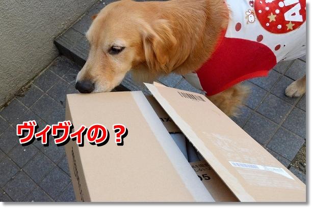 DSC_0855_20121108213451.jpg