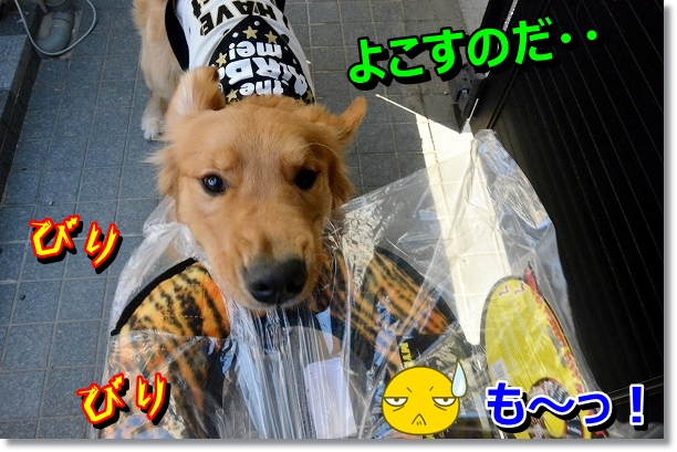 DSC_0860_20121108213533.jpg