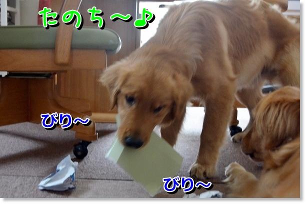 DSC_0868_20120616224625.jpg