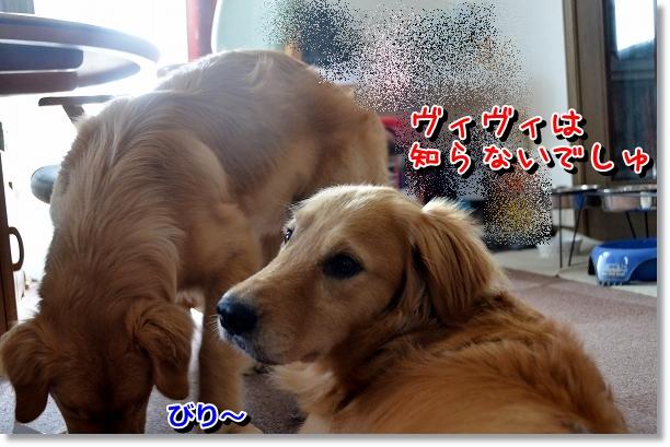 DSC_0869_20120616224657.jpg