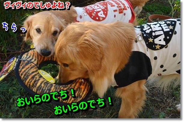 DSC_0875_20121108213640.jpg