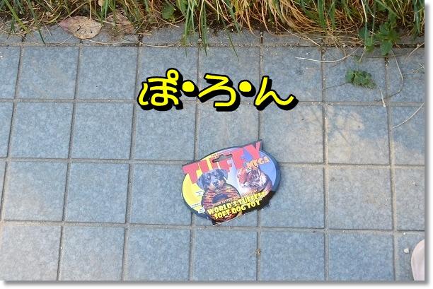 DSC_0881_20121108213639.jpg