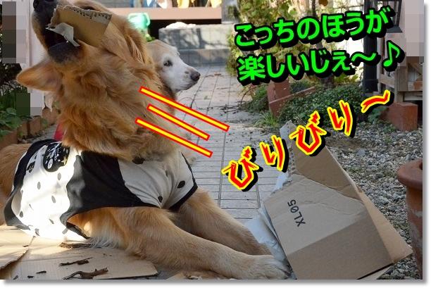 DSC_0900_20121108213822.jpg