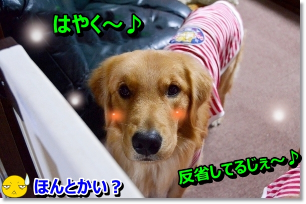 DSC_0919-1.jpg