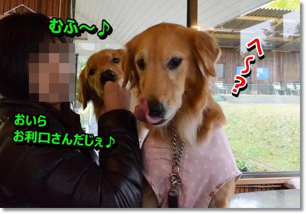 DSC_1137.jpg
