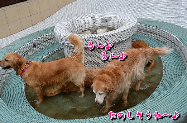 DSC_1369.jpg