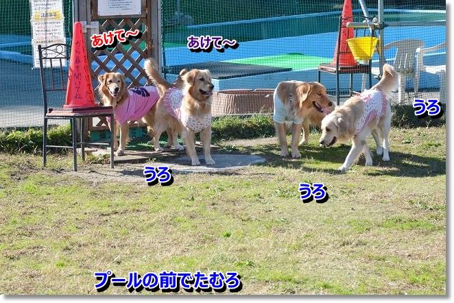 DSC_1405_20121210010416.jpg