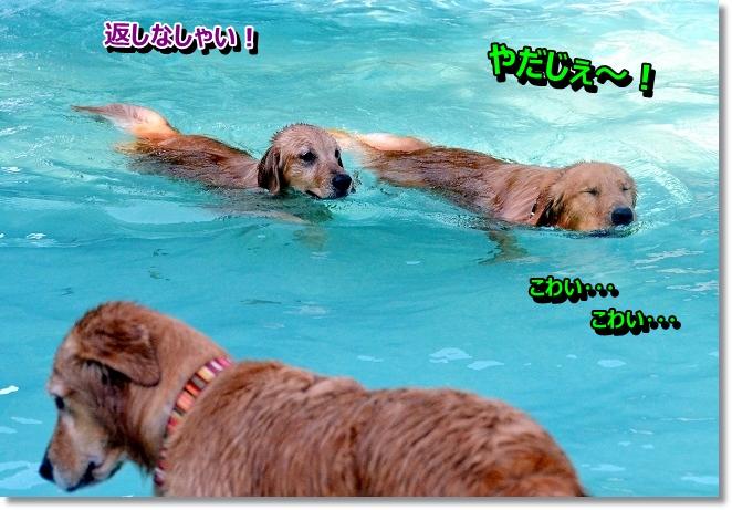 DSC_1435_20121210010443.jpg